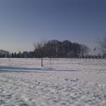 Winterimpressionen 2012: ... dann kam die Sonne zum Vorschein.