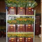 Betriebsimpressionen - Blumen vor der Auslieferung