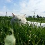 Unsere Katze: Mal Raub- mal Steicheltiier ...